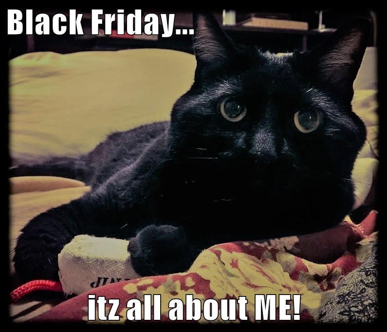 blackfridaycat